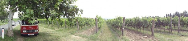 В минуте езды от границы, как и сотни лет назад, зреет виноград, из которого осень делают веселое и солнечное вино